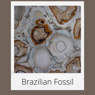 Brazilian Fossil