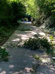 Trail maintenance - Thursday, June 24, 9:00 a.m.