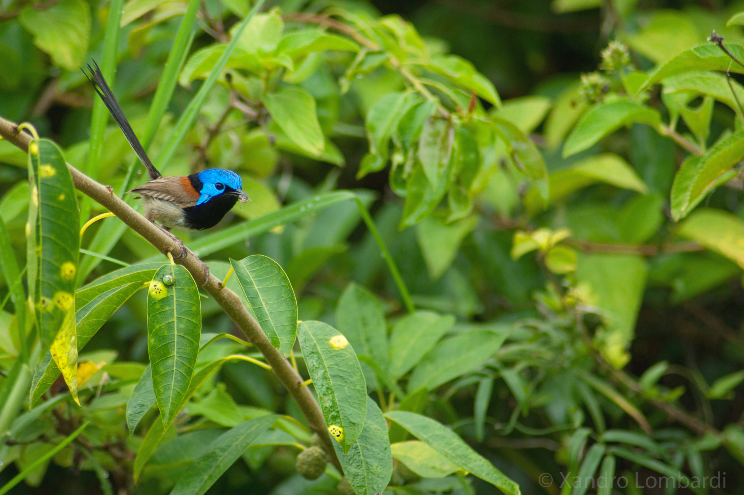 My Photography Wren