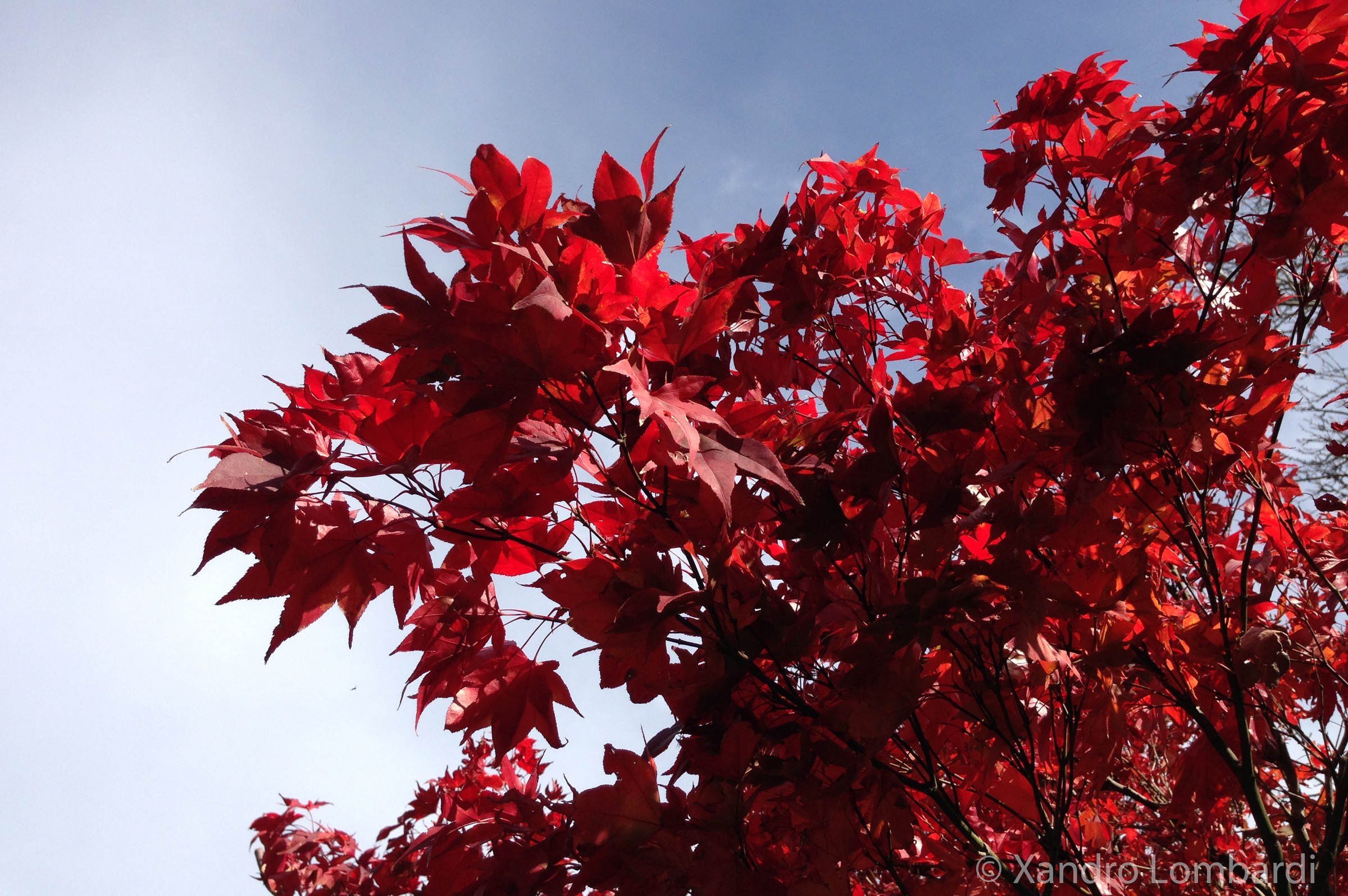 My Photography Red Tree