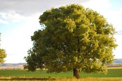 My Photography Green Tree