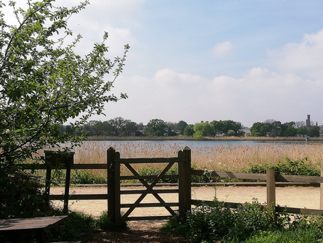 Welbourne Primary School play their part The Woodberry Wetlands
