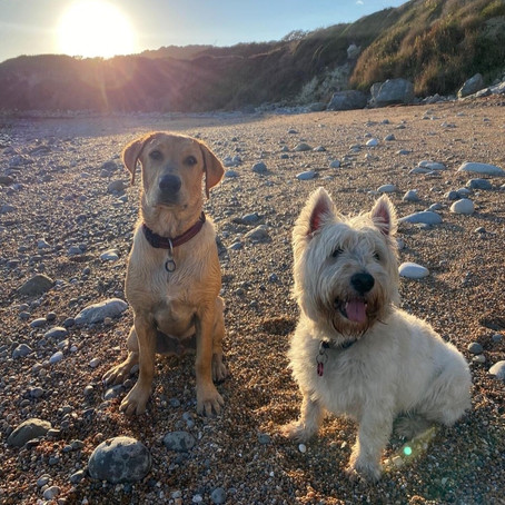 THE BEST DOG FRIENDLY BEACHES IN YORKSHIRE