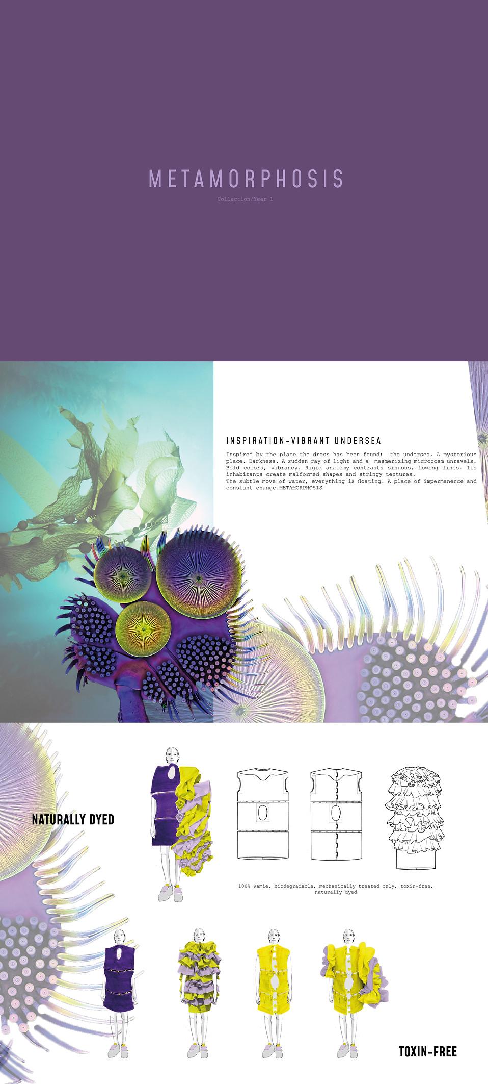 Metamorphosis banner.jpg