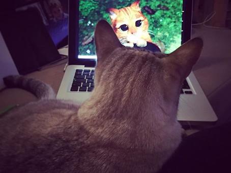 Le jour où...j'ai mis une vidéo youtube à mes chats