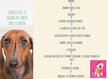 11 signes de stress chez le chien