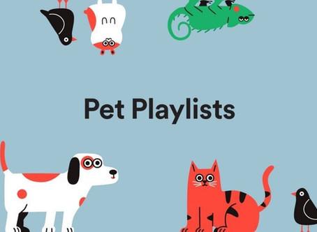 Spotify propose une playlist pour animaux mélomanes (et humains)