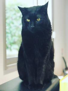 chat-noir-billy-blog-à-poils.JPG
