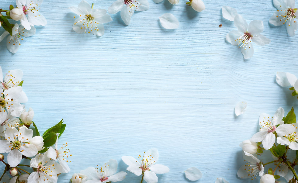 Spring border background with white blos