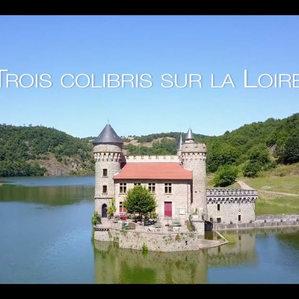 Trois colibris sur la Loire