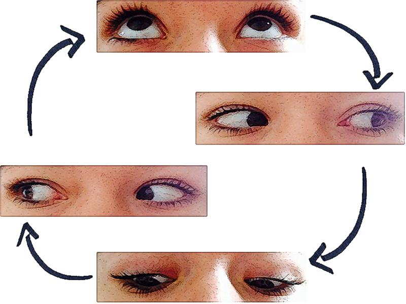 Exercice 3:cercles    -Cette fois, il s'agit de suivre des cercles imaginaires, en faisant tourner les globes, dans le sens des aiguilles d'une montre, puis en sens inverse.    -Toujours sans bouger. Cet exercice doit être pratiqué très calmement (5 fois de chaque côté). Vous pouvez utiliser votre doigt comme une mire et suivre son mouvement.