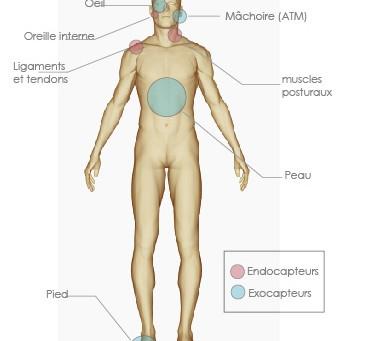 Qu'est-ce que la posturologie?