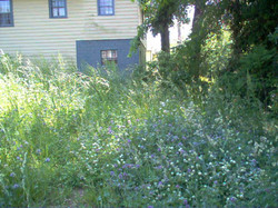 Atwood Lot from street.JPG