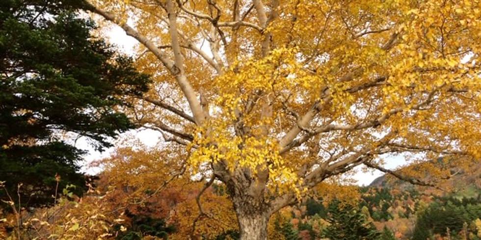【イベント】深まる秋のお散歩ヨガ