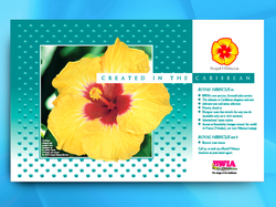Bwia - Hibiscus First Class Service