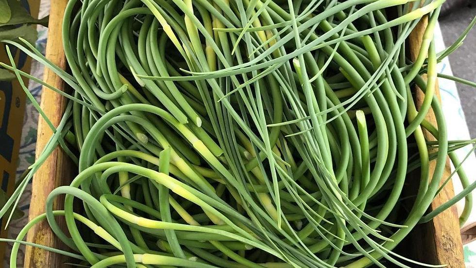 Garlic scapes (Potter's Garlic)