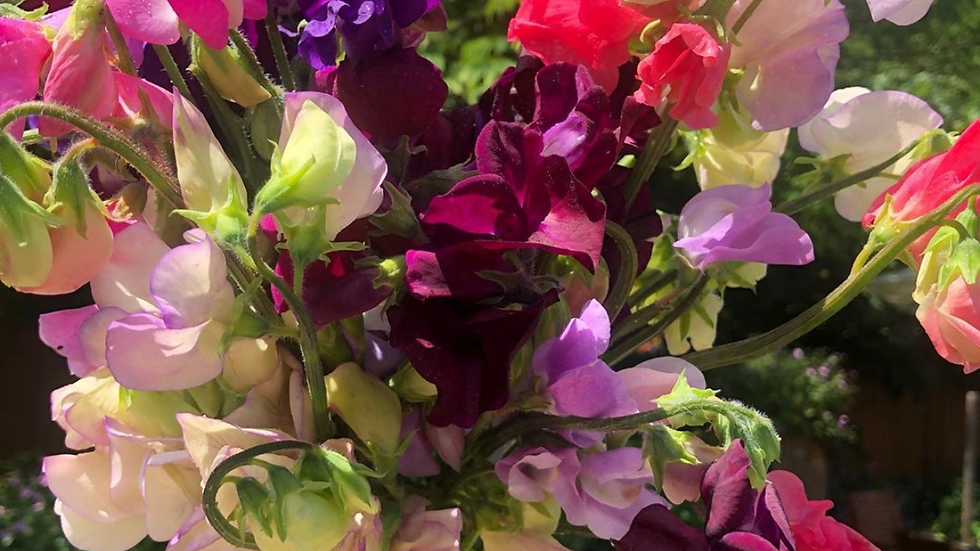 Sweet pea bouquet