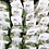 Thumbnail: Microgreens Mix