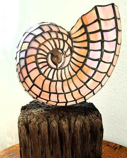 ammonite nautilus stained glass