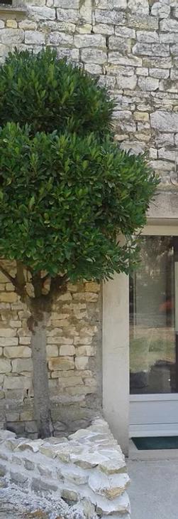 tumtumtree.webp
