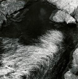 Tide Pool, Maine