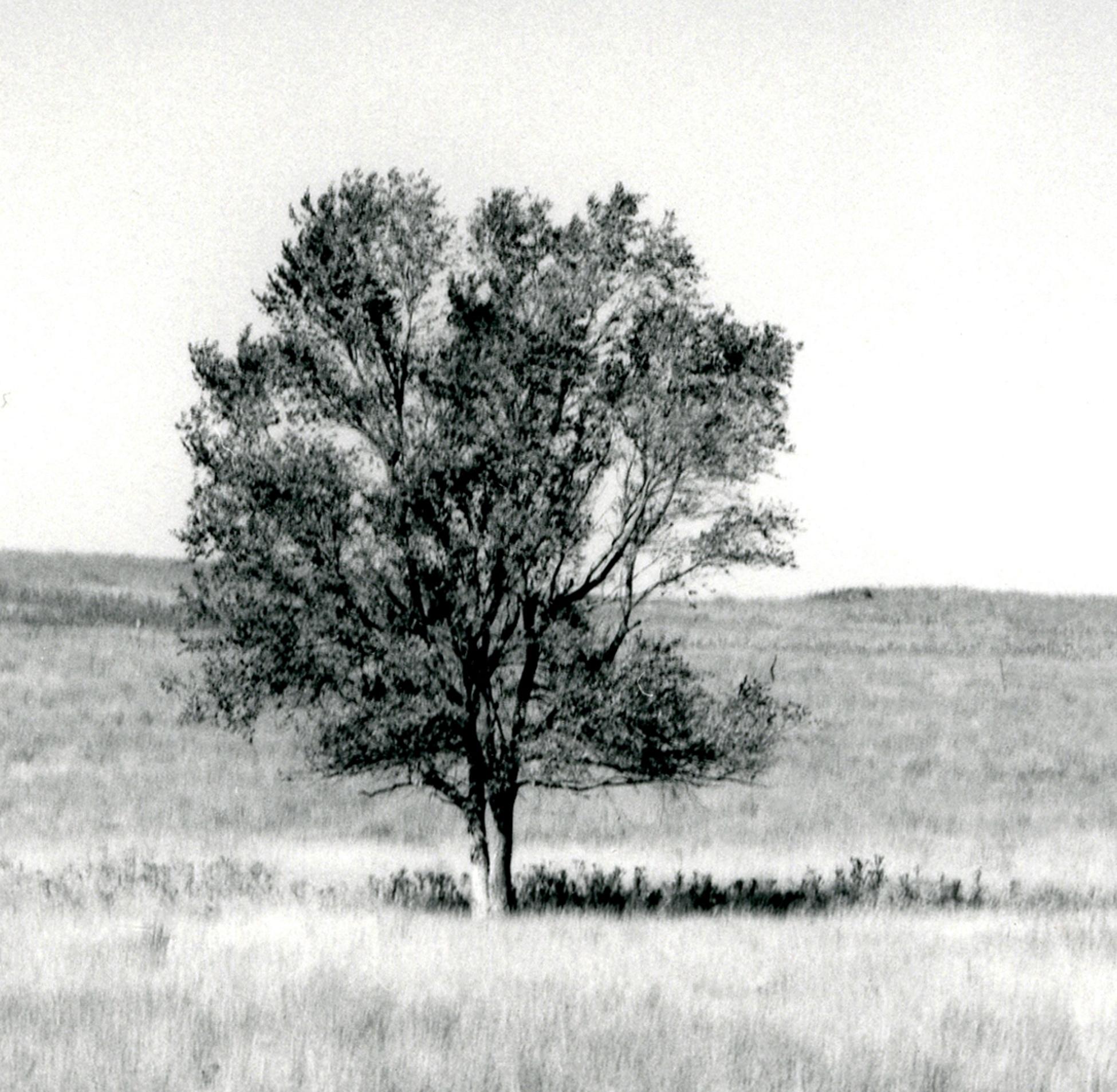 Near Quinter, Kansas (Elegy for E.C)