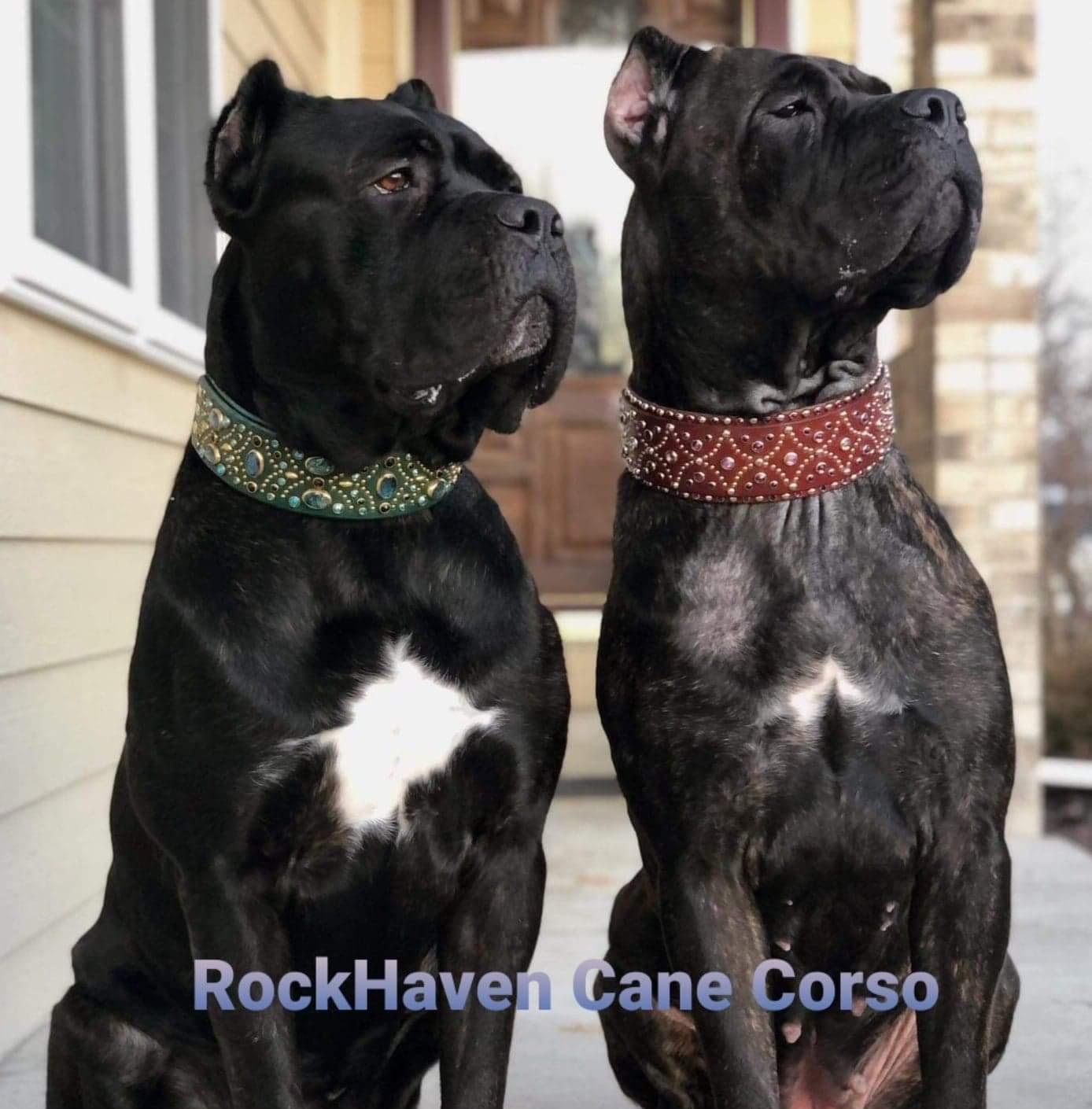 rockhaven manny cece guarding
