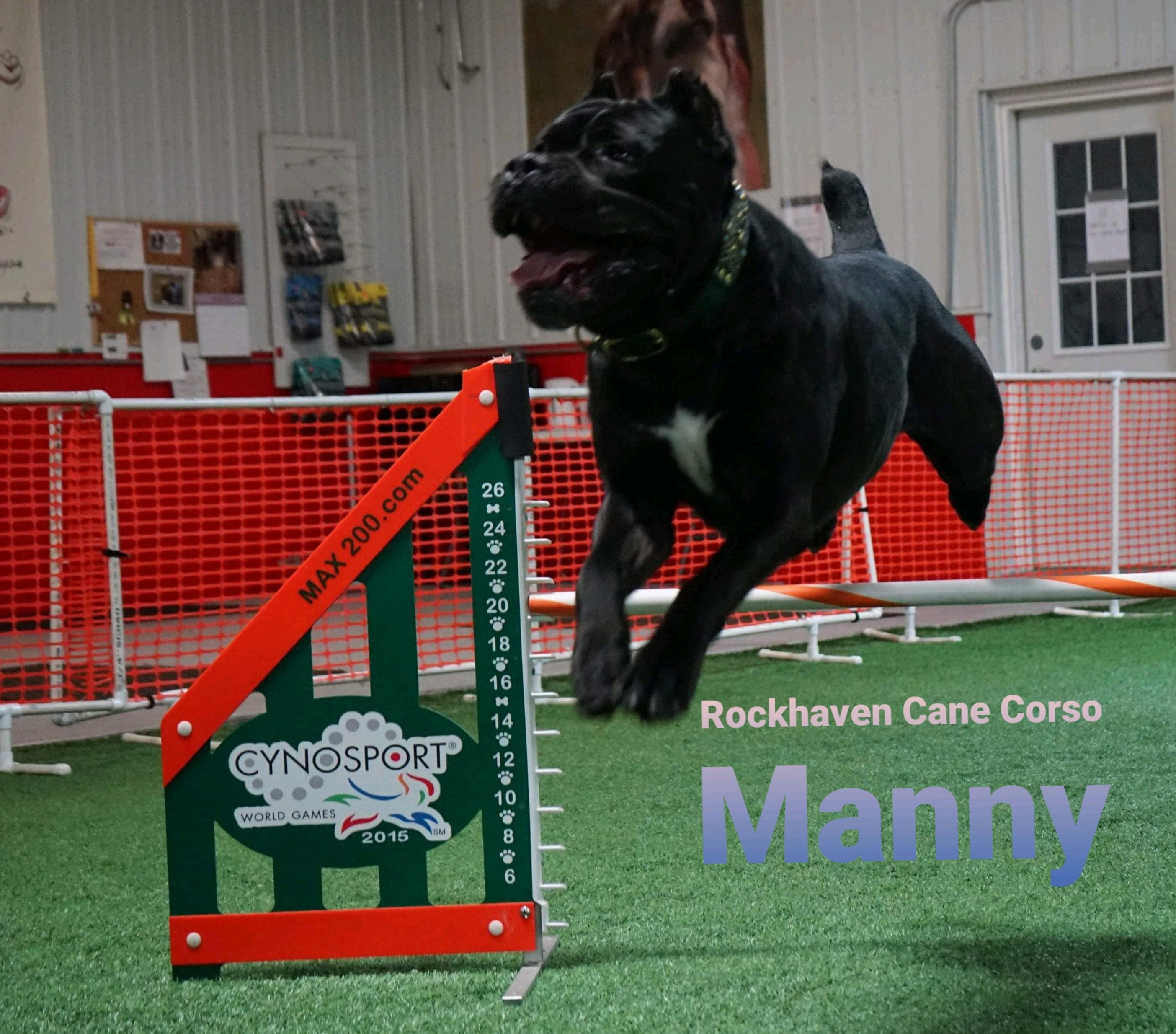 rockhaven manny agility jump