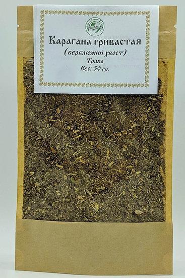 Карагана гривастая (побег) (молотый)