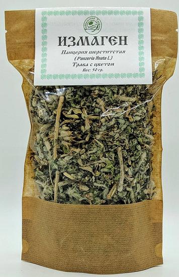 Измаген  (панцерия шерститстая) (трава с цветом)
