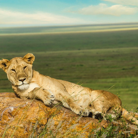 2021 East Africa Safari Travel Guide - Kenya and Tanzania