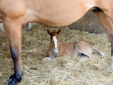 NJ Equine Photographer | Hello New Baby!!!