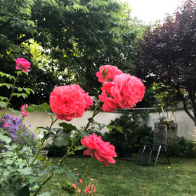 手入れの行き届いた綺麗なお庭に季節の花が咲いていてとても素敵。この庭でホストマザーの焼いてくれたケーキをいただき、昔話に花を咲かせるのはとても嬉しく楽しいひと時でした。