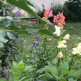 ウィーンの庭