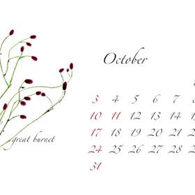 2021年カレンダー10月 はがき