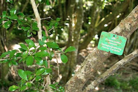 Discover: Umtiza Nature Reserve