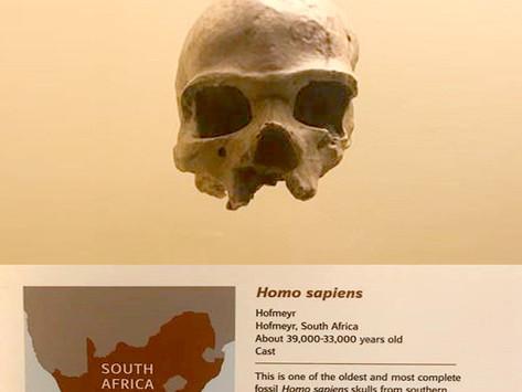 The East London Museum treasure rewriting human prehistory
