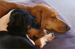 Jake-dogs.jpg