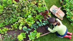 community-garden-0414201.jpg
