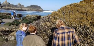 Coastal Oceanography (OC 332)