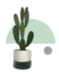 cacti.png