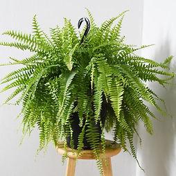 house-plants-thd100003-c3_600.jpeg
