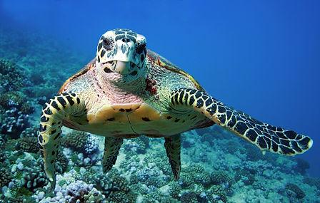 kaplumbağa görüntü kapak.jpg