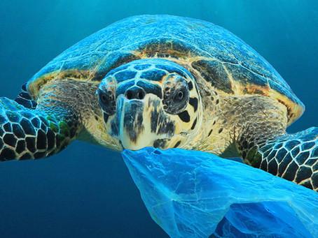 Mikroplastikleri Yeterince Tanıyormuyuz  ?