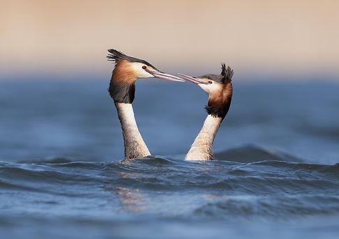 Vogelfotografie, Futen