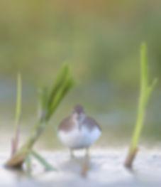Witgat gefotografeerd tijdens foerageren.