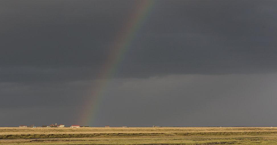 Vogelfotografie IJsland