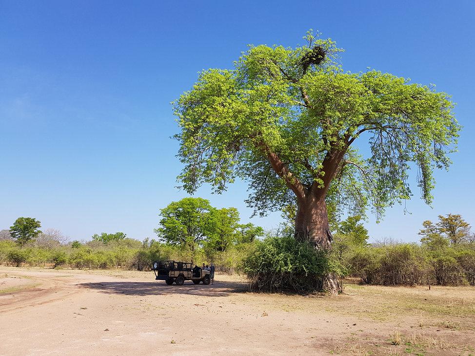 Africa, Zambia, South Luangwa