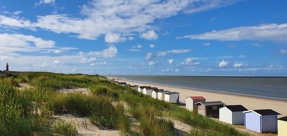 Wad- en Kustvogels, Strand van Texel.