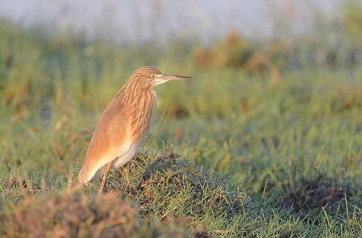 Vogelfotografie Ralreiger.